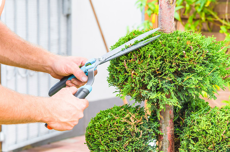 equipment-for-topiary