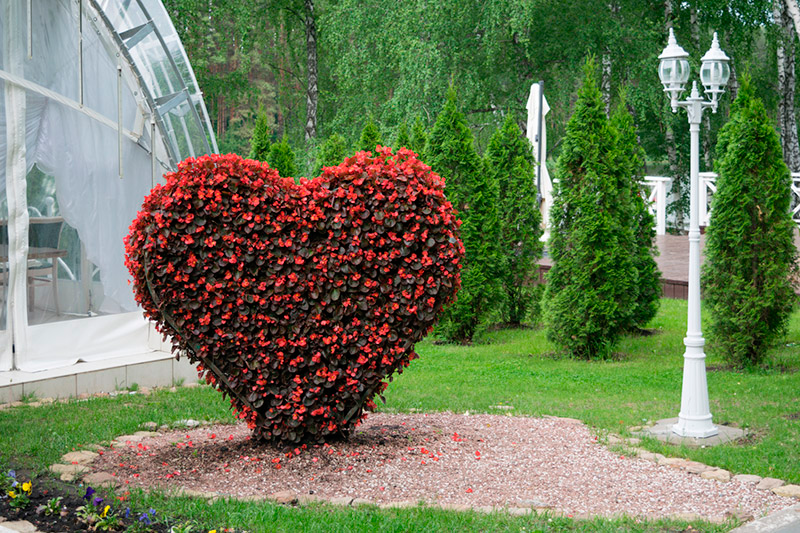 Lovely Topiary Designs Part - 5: The Basics Of Topiary